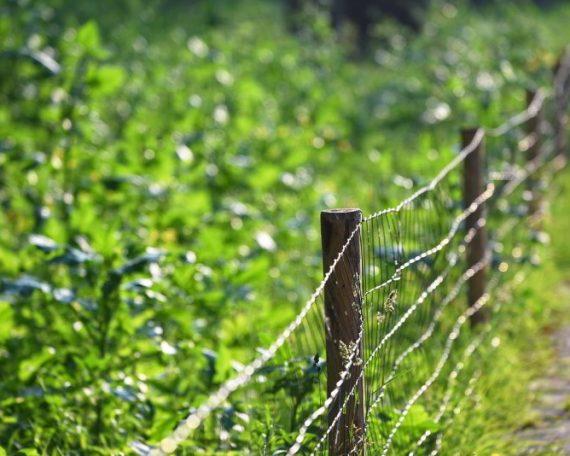 Ograja iz žice